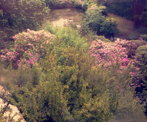 flowers, alton towers, and green image