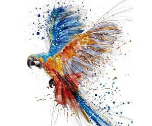 art, drawing, and parrot image