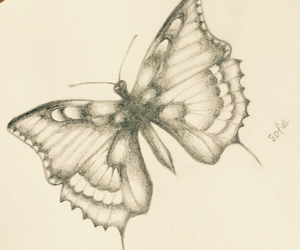 butterfly, drawing, and future image