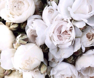 flowers, white, and rose image
