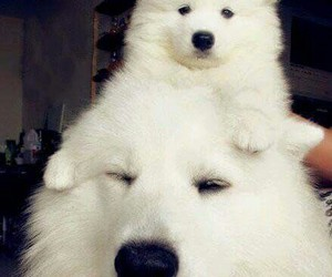 dogs and fluffy image