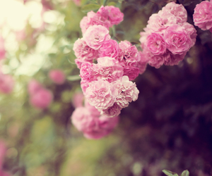 bloom, pink, and delicate image