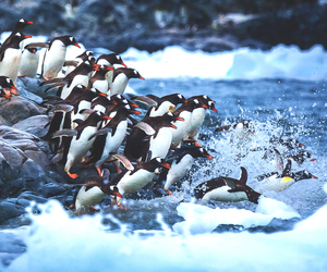 nature and penguin image