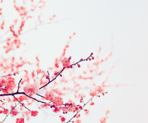 beautiful, blossoms, and flower image