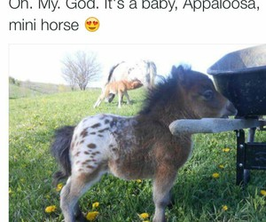 horse, awesome, and baby image