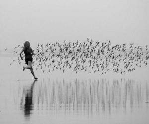 photography and birds image