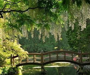 bridge, tree, and garden image