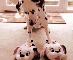 dalmatian, dog, and slipper image