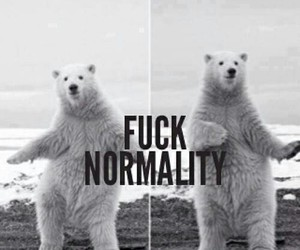 funny, oso polar, and normality image