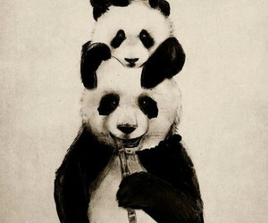pandas are cute: 3 image