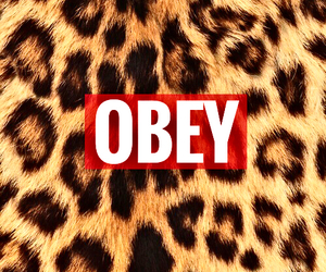 leopard, obey, and background image