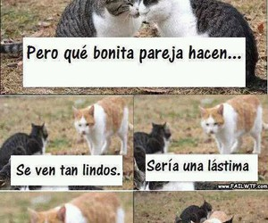 funny and Gatos image
