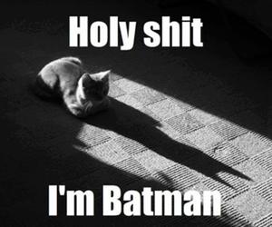 batman, cat, and funny image