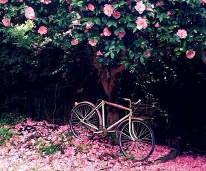 roses, bicicleta, and park image