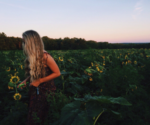 aesthetic, blond hair, and field image