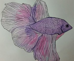 animal, drawing, and fish image