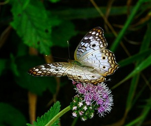 butterfly, hd, and mariposa image