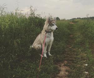 husky, my, and love image