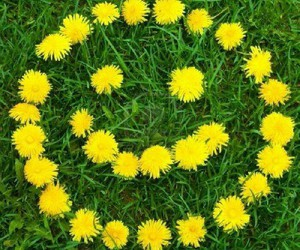 flowers, smile, and yellow image