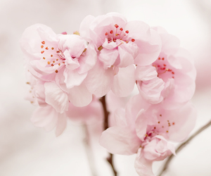 beautiful, flowers, and mix image