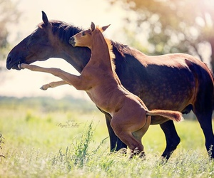 horse, foal, and love image