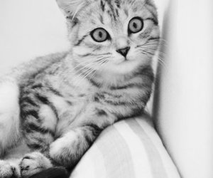 black&white and cats image