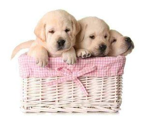 cute dogs!! image