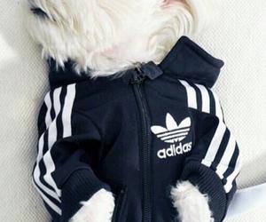 dog, adidas, and cute image
