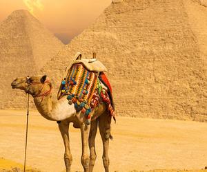 camel, desert, and pyramids image