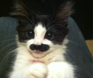 cat, mustache, and kitten image