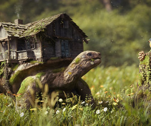 house, turtle, and bird image