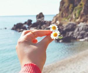 ask, daisy, and mavi image