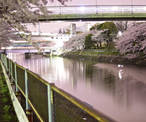 beauty, japan, and nature image