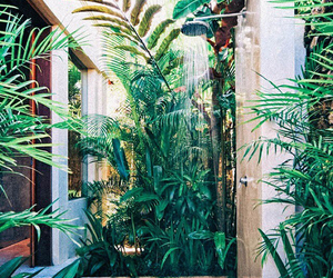 shower, plants, and green image