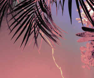 palm trees and pink image