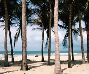 beach, life, and nature image