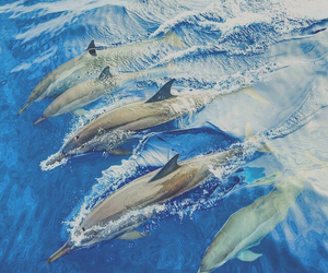 beautiful, beauty, and dolphin image