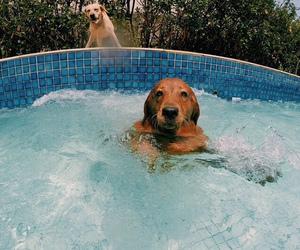 animal, dog, and ocean image