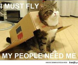 cat, fly, and funny image