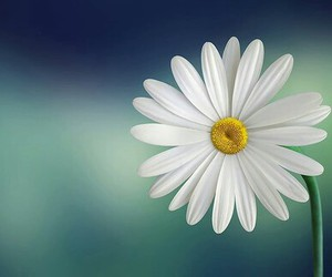 flowers, beautiful, and white image