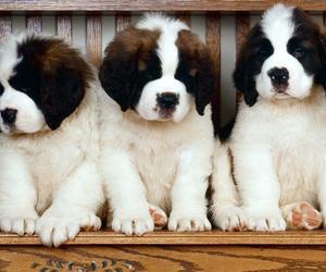 dog, animals, and puppies image