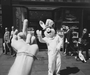lol, cute, and rabbid image
