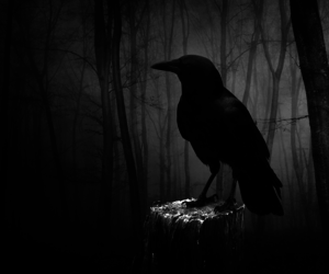 birds, Edgar Allen Poe, and goth image