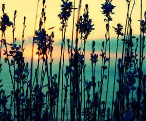 sunset, flowers, and summer image