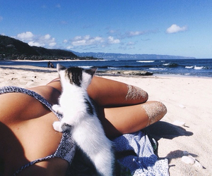 cat, beach, and summer image
