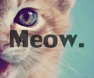 animal, mignon, and cat image