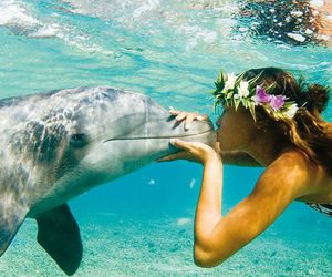 dolphin, ocean, and love image