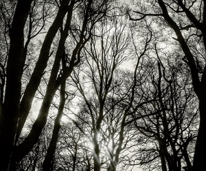black and white, forest, and landscape image