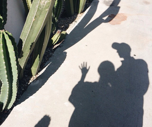 cactus and shadow image