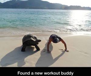 workout, beach, and turtle image